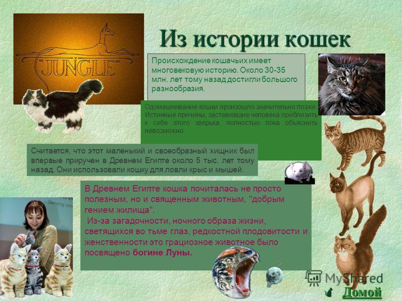 Породы кошек « Кошка… Загадочное, непредсказуемое существо, притягивающее к себе человека с незапамятной поры». Н. Непомнящий Н. Непомнящий ПЕРСИДСКАЯ Царственно величественные и аристократичные на вид, персидские кошки имеют удивительно мягкий, покл