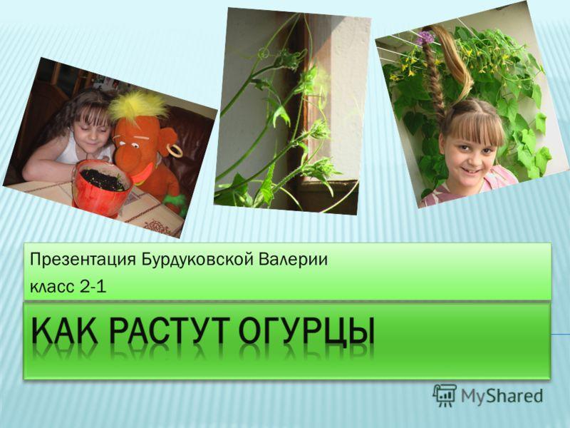 Презентация Бурдуковской Валерии класс 2-1 Презентация Бурдуковской Валерии класс 2-1