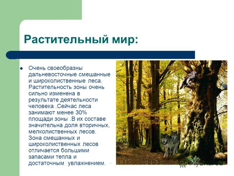 Растительный мир: Очень своеобразны дальневосточные смешанные и широколиственные леса. Растительность зоны очень сильно изменена в результате деятельности человека.Сейчас леса занимают менее 30% площади зоны.В их составе значительна доля вторичных, м