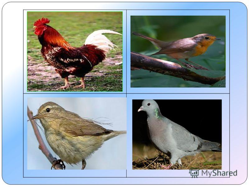 Петух - домашняя птица.