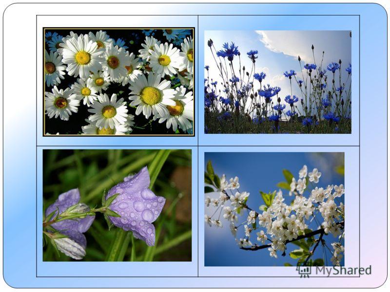 Это не полевые цветы.