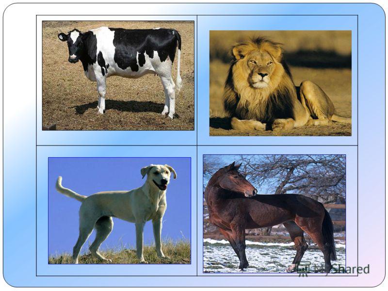 Лев – не домашнее животное.