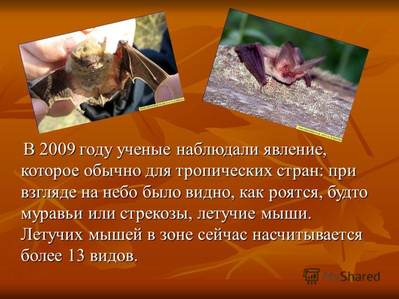 В 2009 году ученые наблюдали явление, которое обычно для тропических стран: при взгляде на небо было видно, как роятся, будто муравьи или стрекозы, летучие мыши. Летучих мышей в зоне сейчас насчитывается более 13 видов.