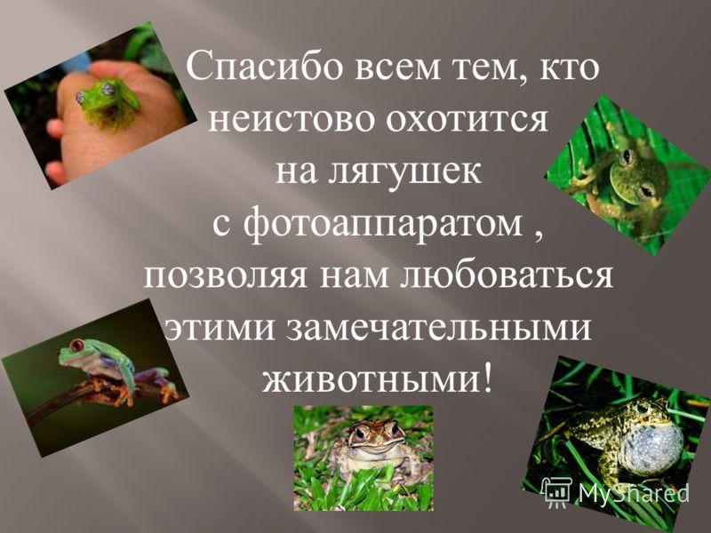 Спасибо всем тем, кто неистово охотится на лягушек с фотоаппаратом, позволяя нам любоваться этими замечательными животными !