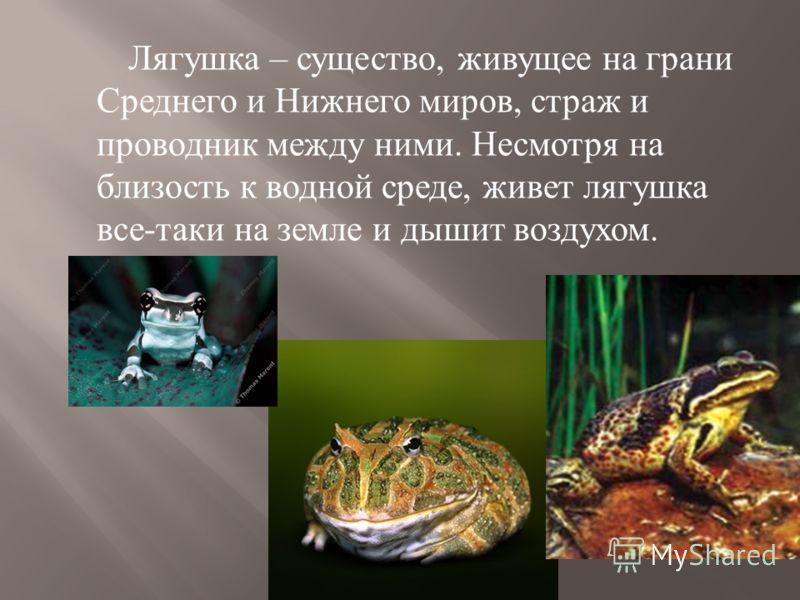 Лягушка – существо, живущее на грани Среднего и Нижнего миров, страж и проводник между ними. Несмотря на близость к водной среде, живет лягушка все - таки на земле и дышит воздухом.