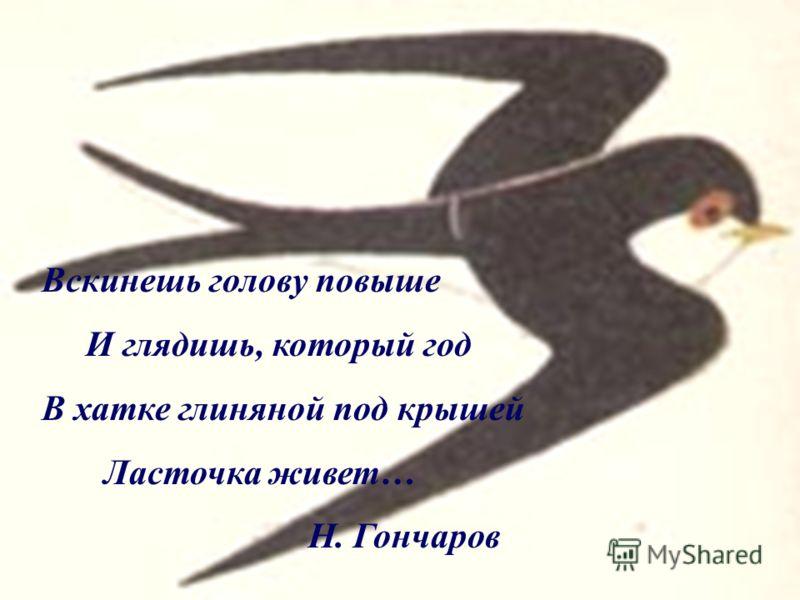 Вскинешь голову повыше И глядишь, который год В хатке глиняной под крышей Ласточка живет… Н. Гончаров