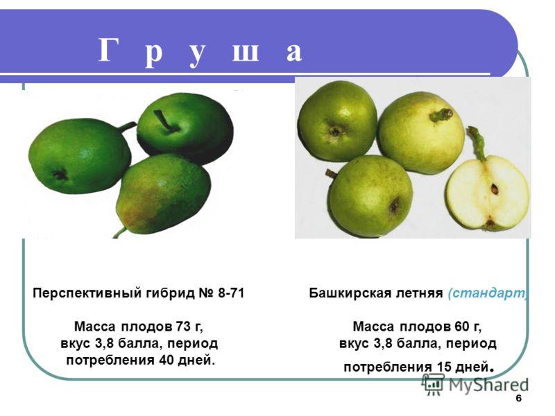 6 Г р у ш а Башкирская летняя (стандарт) Масса плодов 60 г, вкус 3,8 балла, период потребления 15 дней. Перспективный гибрид 8-71 Масса плодов 73 г, вкус 3,8 балла, период потребления 40 дней.