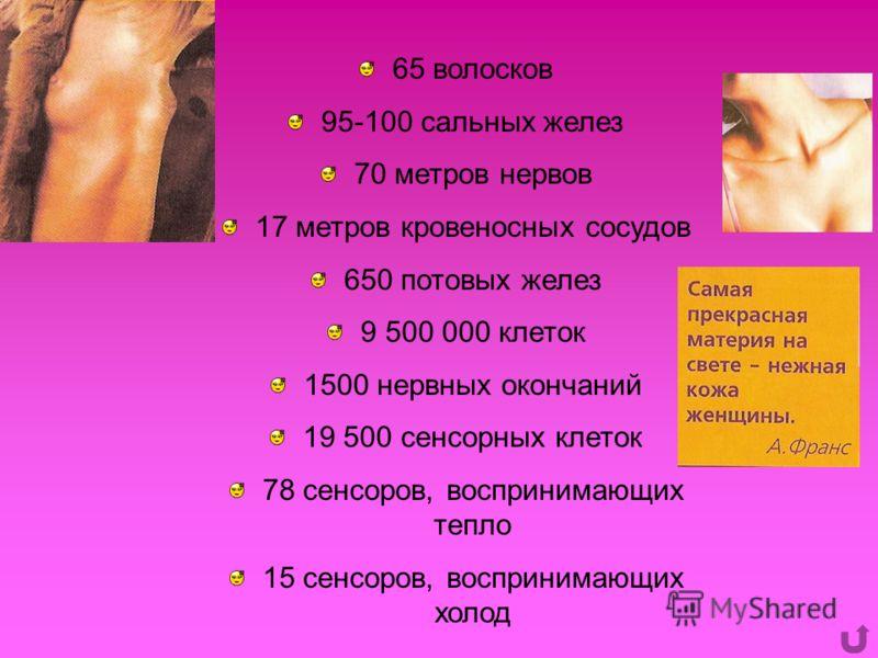 65 волосков 95-100 сальных желез 70 метров нервов 17 метров кровеносных сосудов 650 потовых желез 9 500 000 клеток 1500 нервных окончаний 19 500 сенсорных клеток 78 сенсоров, воспринимающих тепло 15 сенсоров, воспринимающих холод