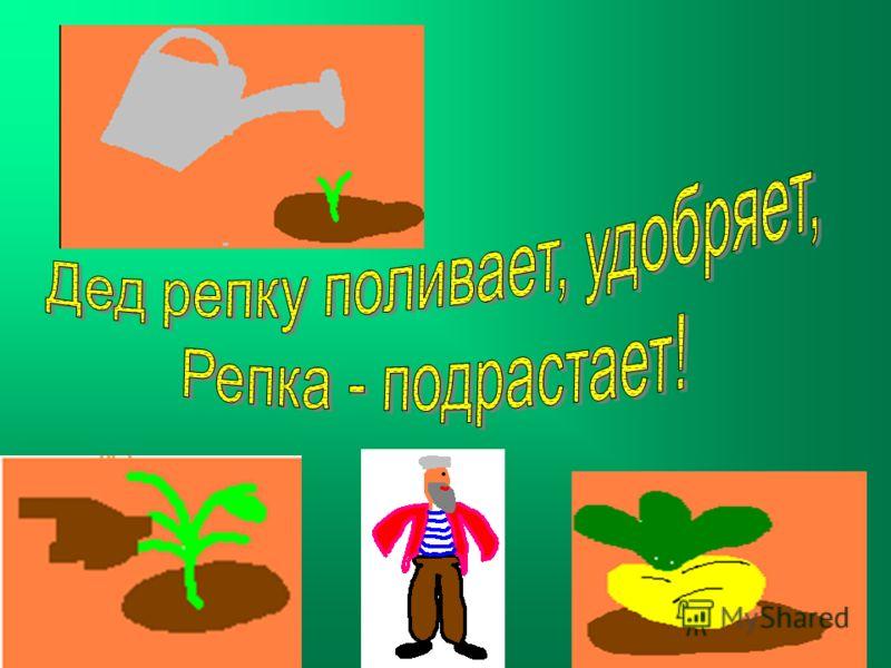 Посадил дед репку… Время идет – репка растет!