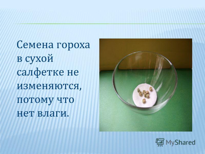 Семена гороха в сухой салфетке не изменяются, потому что нет влаги.