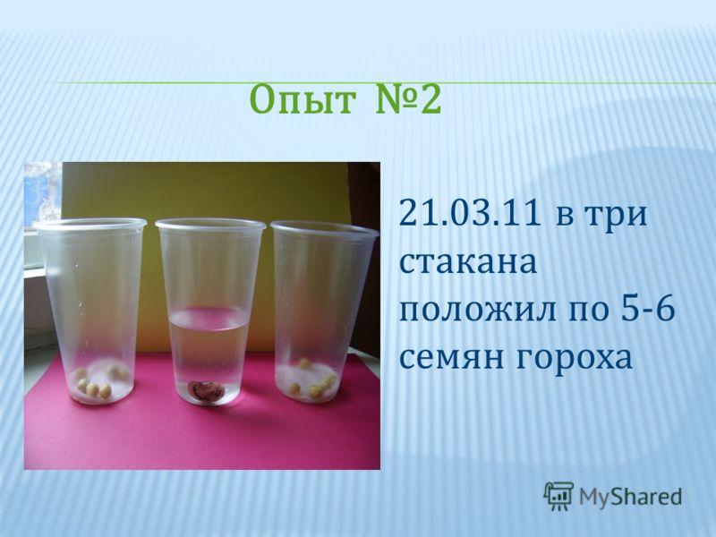 21.03.11 в три стакана положил по 5-6 семян гороха Опыт 2