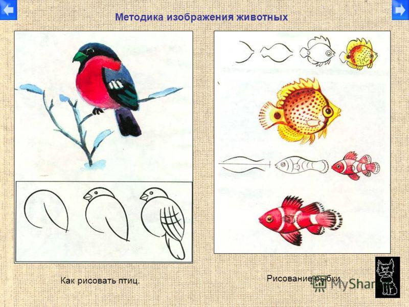 Как рисовать птиц. Рисование рыбки. Методика изображения животных