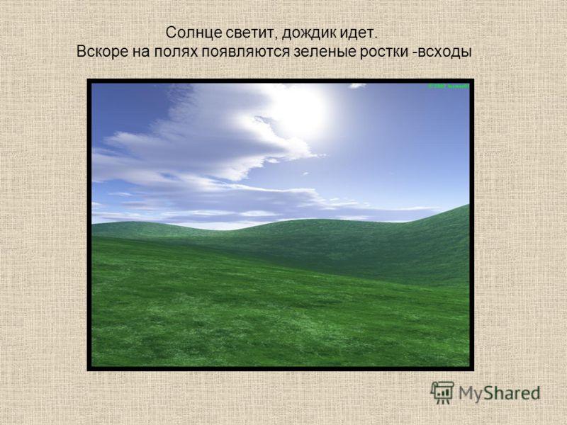 Солнце светит, дождик идет. Вскоре на полях появляются зеленые ростки -всходы