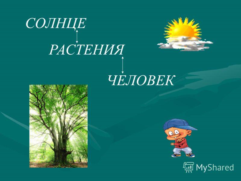 Дыхание и питание растений