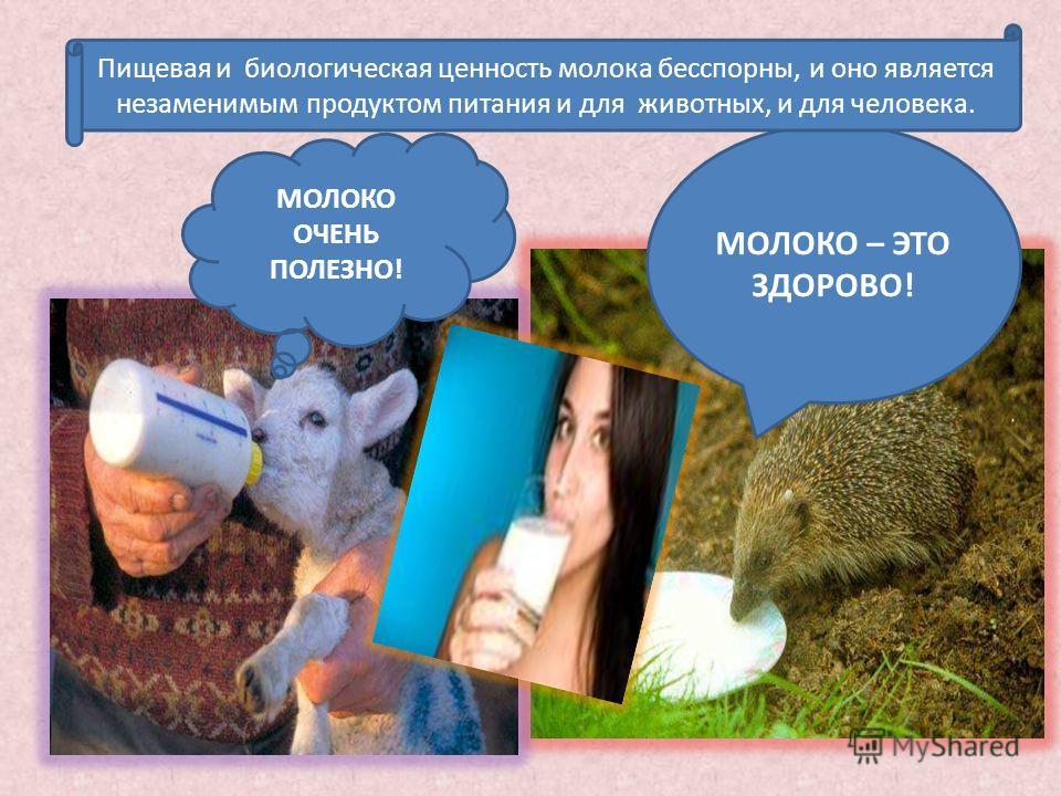 МОЛОКО – ЭТО ЗДОРОВО! МОЛОКО ОЧЕНЬ ПОЛЕЗНО! Пищевая и биологическая ценность молока бесспорны, и оно является незаменимым продуктом питания и для животных, и для человека.