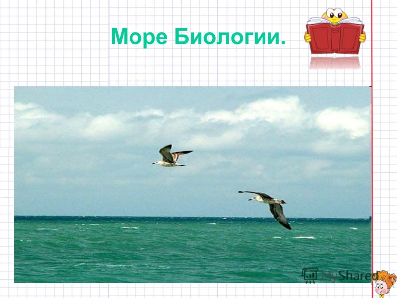 Море Биологии.