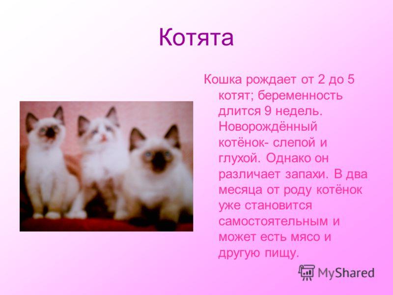 Котята Кошка рождает от 2 до 5 котят; беременность длится 9 недель. Новорождённый котёнок- слепой и глухой. Однако он различает запахи. В два месяца от роду котёнок уже становится самостоятельным и может есть мясо и другую пищу.