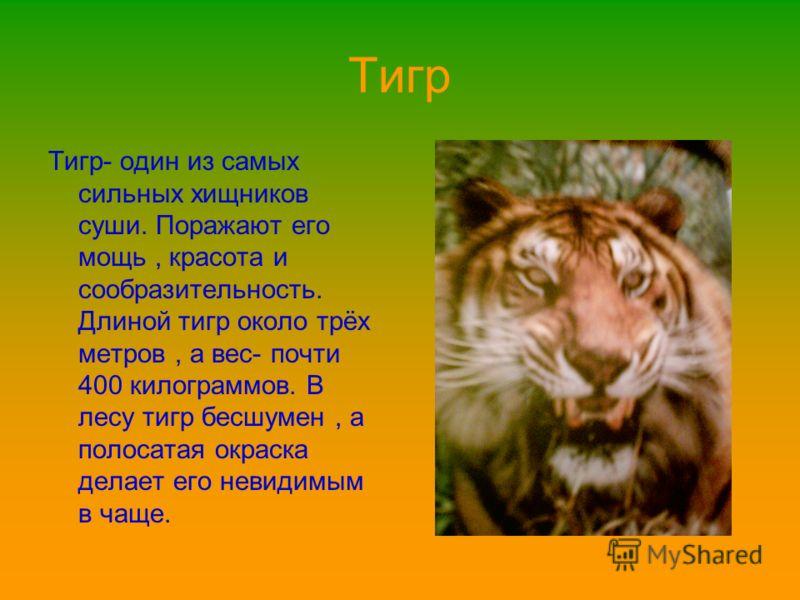 Тигр Тигр- один из самых сильных хищников суши. Поражают его мощь, красота и сообразительность. Длиной тигр около трёх метров, а вес- почти 400 килограммов. В лесу тигр бесшумен, а полосатая окраска делает его невидимым в чаще.