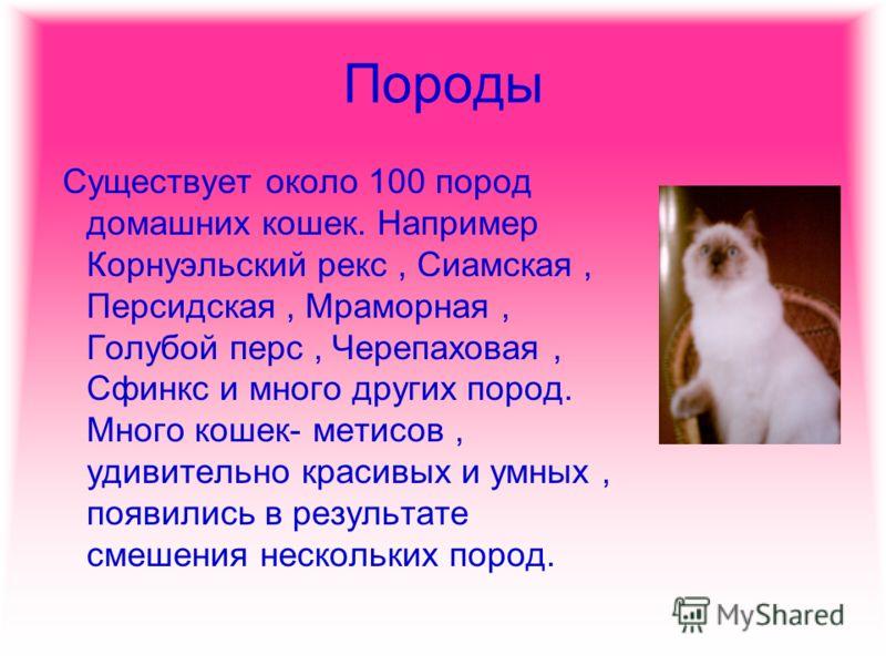 Породы Существует около 100 пород домашних кошек. Например Корнуэльский рекс, Сиамская, Персидская, Мраморная, Голубой перс, Черепаховая, Сфинкс и много других пород. Много кошек- метисов, удивительно красивых и умных, появились в результате смешения