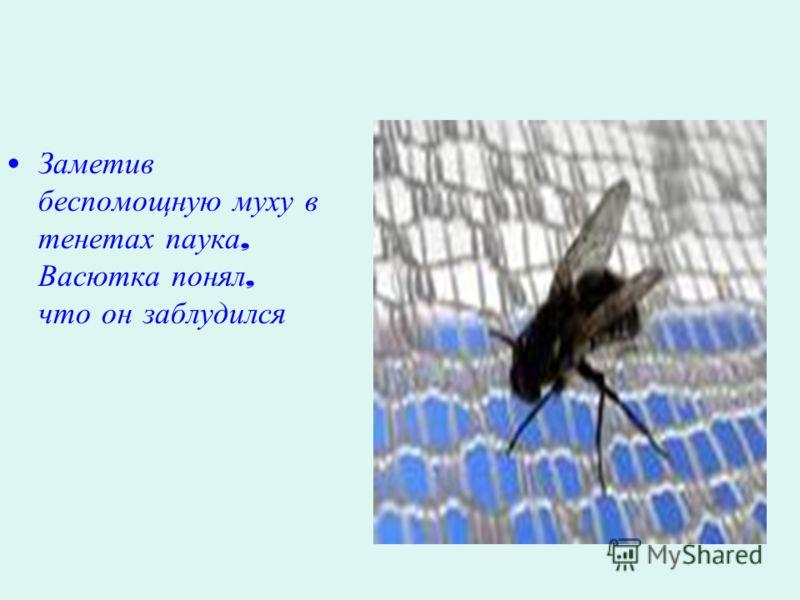 Заметив беспомощную муху в тенетах паука, Васютка понял, что он заблудился