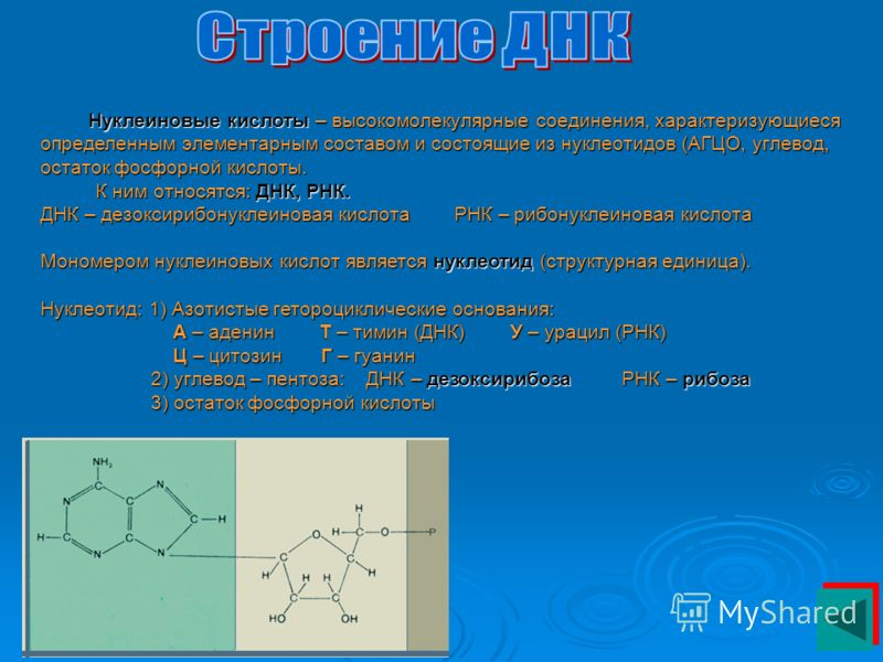 Нуклеиновые кислоты – высокомолекулярные соединения, характеризующиеся определенным элементарным составом и состоящие из нуклеотидов (АГЦО, углевод, остаток фосфорной кислоты. К ним относятся: ДНК, РНК. ДНК – дезоксирибонуклеиновая кислота РНК – рибо