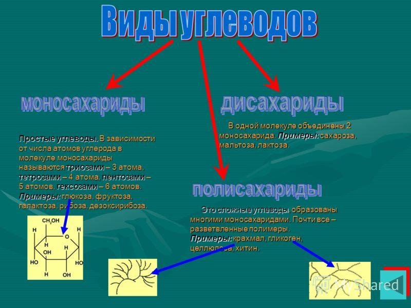 Простые углеводы. В зависимости от числа атомов углерода в молекуле моносахариды называются триозами – 3 атома, тетрозами – 4 атома, пентозами – 5 атомов, гексозами – 6 атомов. Примеры: глюкоза, фруктоза, галактоза, рибоза, дезоксирибоза. В одной мол