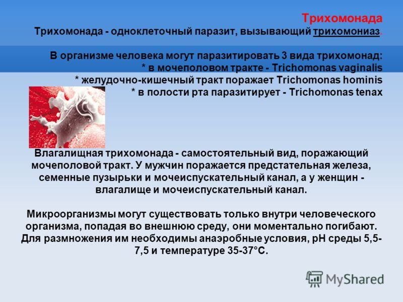 Трихомонада Трихомонада - одноклеточный паразит, вызывающий трихомониаз. В организме человека могут паразитировать 3 вида трихомонад: * в мочеполовом тракте - Trichomonas vaginalis * желудочно-кишечный тракт поражает Trichomonas hominis * в полости р