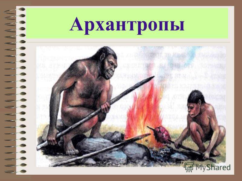 Архантропы