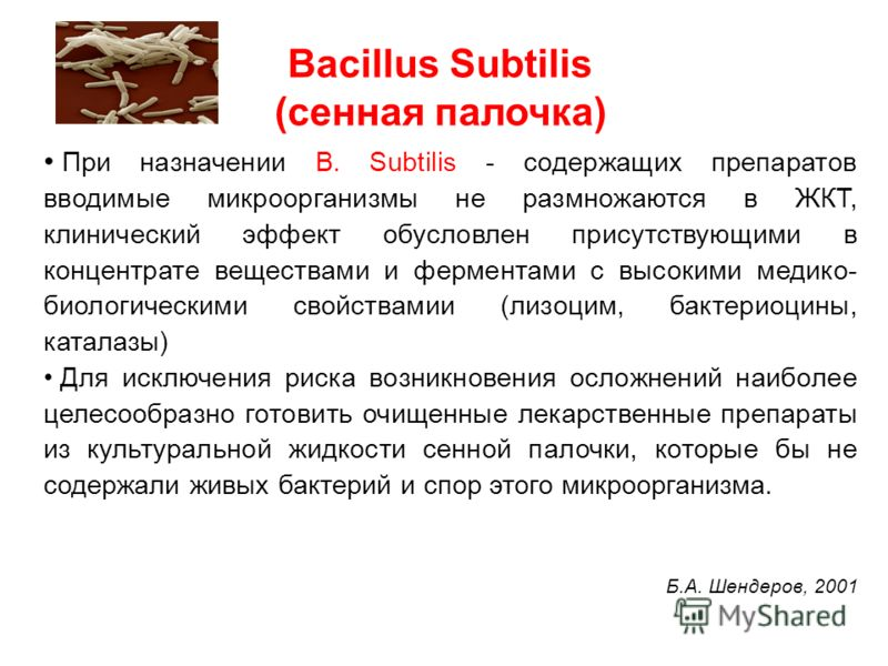 Bacillus Subtilis (сенная палочка) При назначении B. Subtilis - содержащих препаратов вводимые микроорганизмы не размножаются в ЖКТ, клинический эффект обусловлен присутствующими в концентрате веществами и ферментами с высокими медико- биологическими
