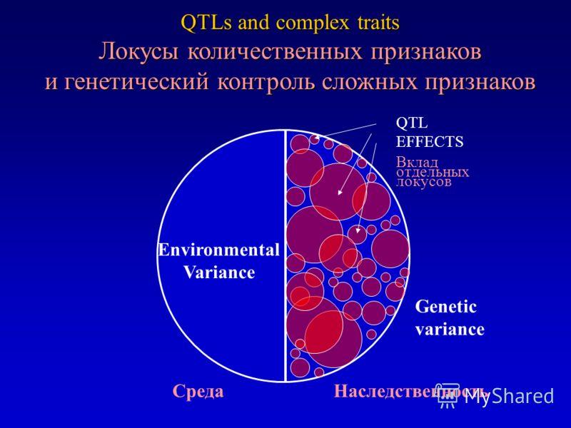 QTLs and complex traits Локусы количественных признаков и генетический контроль сложных признаков Environmental Variance Genetic variance QTL EFFECTS Вклад отдельных локусов Среда Наследственность
