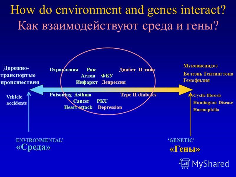 How do environment and genes interact? Дорожно- транспортые происшествия ENVIRONMENTAL GENETIC' Муковисцидоз Болезнь Гентингтона Гемофилия Отравления Рак Диабет II типа Aстма ФКУ Инфаркт Депрессия Poisoning Asthma Type II diabetes CancerPKU Heart att