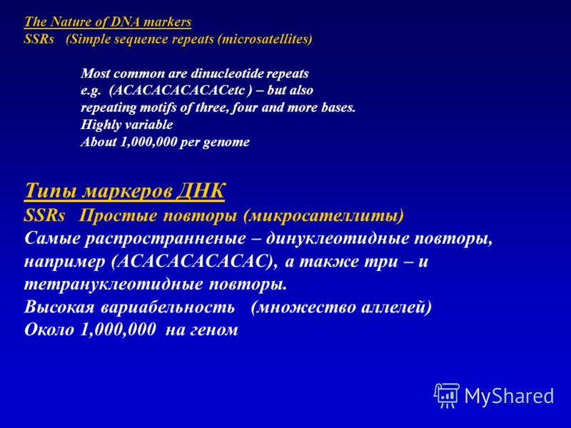 The Nature of DNA markers SSRs (Simple sequence repeats (microsatellites) Most common are dinucleotide repeats e.g. (ACACACACACACetc ) – but also repeating motifs of three, four and more bases. Highly variable About 1,000,000 per genome Типы маркеров