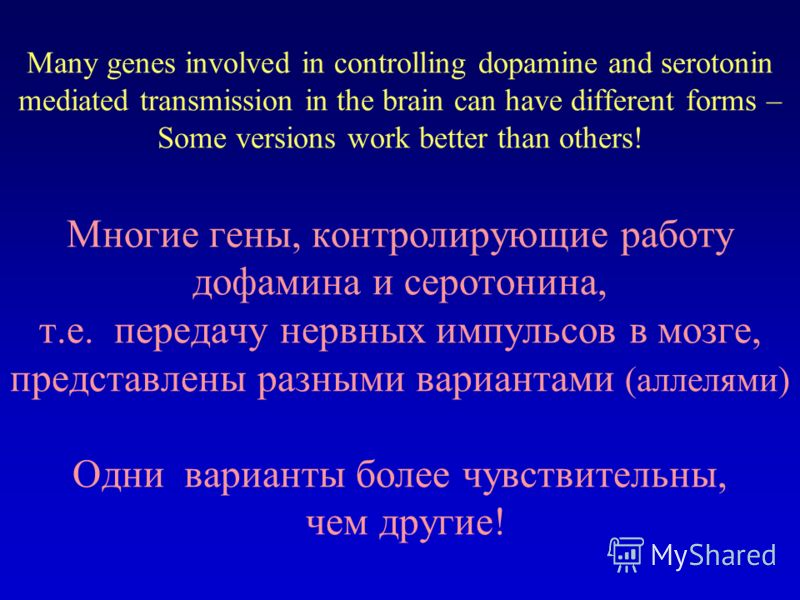 Many genes involved in controlling dopamine and serotonin mediated transmission in the brain can have different forms – Some versions work better than others! Многие гены, контролирующие работу дофамина и серотонина, т.е. передачу нервных импульсов в