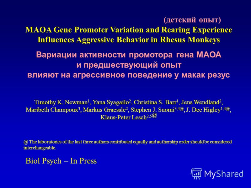 MAOA Gene Promoter Variation and Rearing Experience Influences Aggressive Behavior in Rhesus Monkeys Вариации активности промотора гена МАОА и предшествующий опыт влияют на агрессивное поведение у макак резус Timothy K. Newman 1, Yana Syagailo 2, Chr