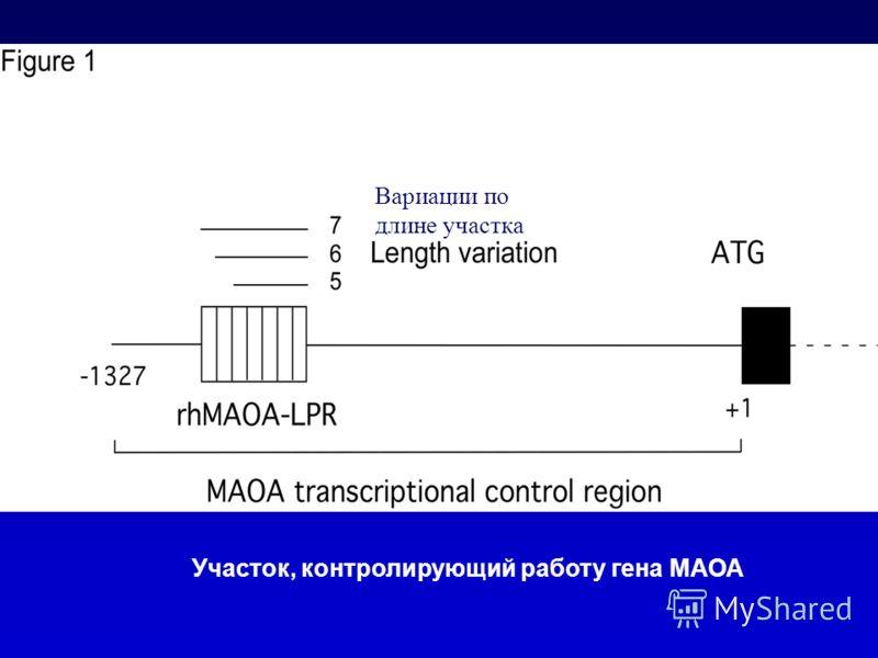 Участок, контролирующий работу гена МАОА Вариации по длине участка