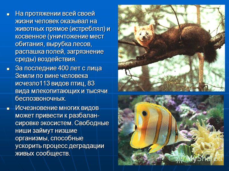 На протяжении всей своей жизни человек оказывал на животных прямое (истреблял) и косвенное (уничтожение мест обитания, вырубка лесов, распашка полей,