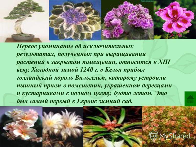Немного об истории История комнатного цветоводства уходит корнями в глубокую древность: человеку всегда хотелось иметь рядом с собой красивые растения, украшающие его дом. Понятие