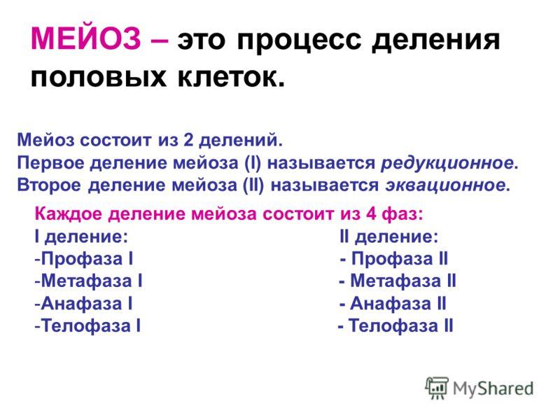МЕЙОЗ – это процесс деления половых клеток. Мейоз состоит из 2 делений. Первое деление мейоза (I) называется редукционное. Второе деление мейоза (II) называется эквационное. Каждое деление мейоза состоит из 4 фаз: I деление: II деление: -Профаза I -