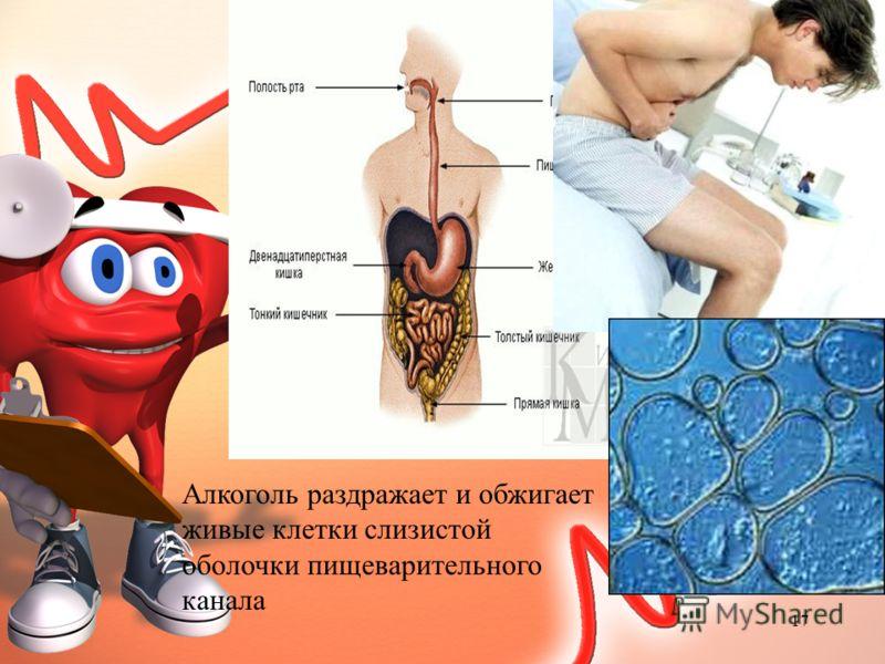 Алкоголь раздражает и обжигает живые клетки слизистой оболочки пищеварительного канала 17