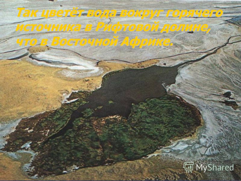 Так цветёт вода вокруг горячего источника в Рифтовой долине, что в Восточной Африке.