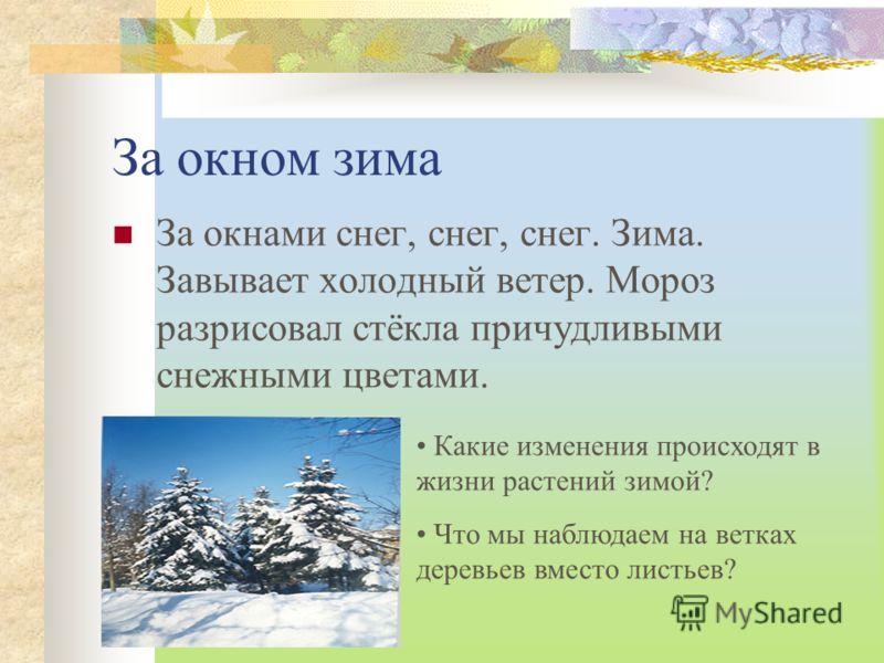 За окном зима За окнами снег, снег, снег. Зима. Завывает холодный ветер. Мороз разрисовал стёкла причудливыми снежными цветами. Какие изменения происходят в жизни растений зимой? Что мы наблюдаем на ветках деревьев вместо листьев?