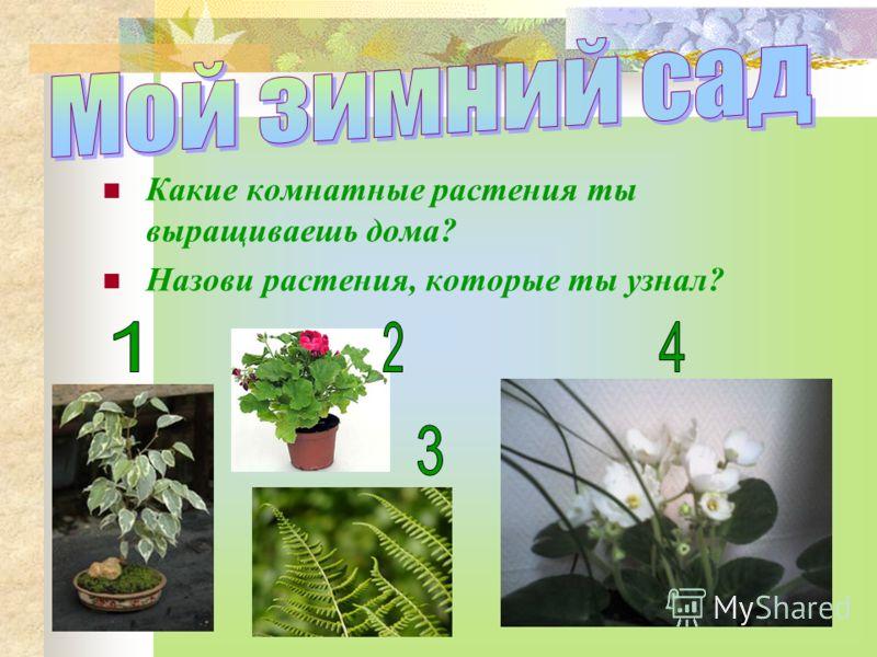 Какие комнатные растения ты выращиваешь дома? Назови растения, которые ты узнал?