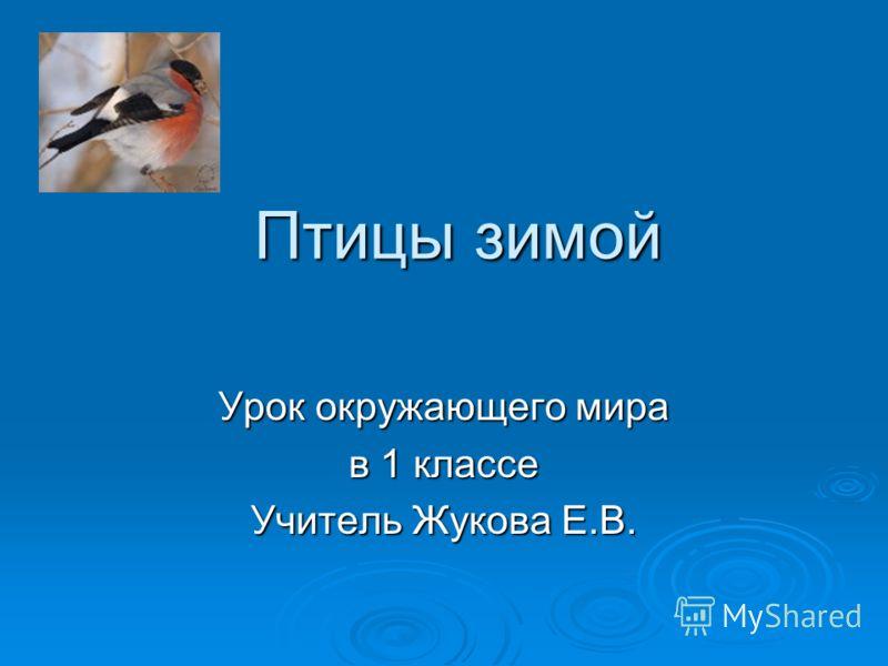 Птицы зимой Урок окружающего мира в 1 классе Учитель Жукова Е.В.
