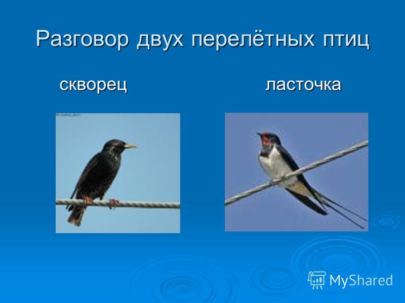Разговор двух перелётных птиц скворец ласточка скворец ласточка
