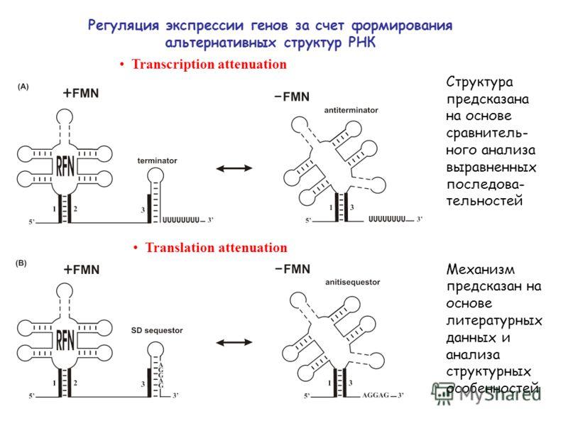 Регуляция экспрессии генов за счет формирования альтернативных структур РНК Transcription attenuation Translation attenuation Структура предсказана на основе сравнитель- ного анализа выравненных последова- тельностей Механизм предсказан на основе лит