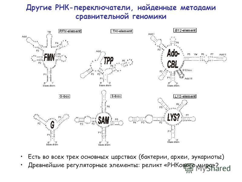 Другие РНК-переключатели, найденные методами сравнительной геномики Есть во всех трех основных царствах (бактерии, археи, эукариоты) Древнейшие регуляторные элементы: реликт «РНКового мира»?