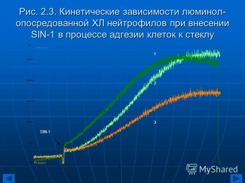 Рис. 2.3. Кинетические зависимости люминол- опосредованной ХЛ нейтрофилов при внесении SIN-1 в процессе адгезии клеток к стеклу 123123 SIN-1