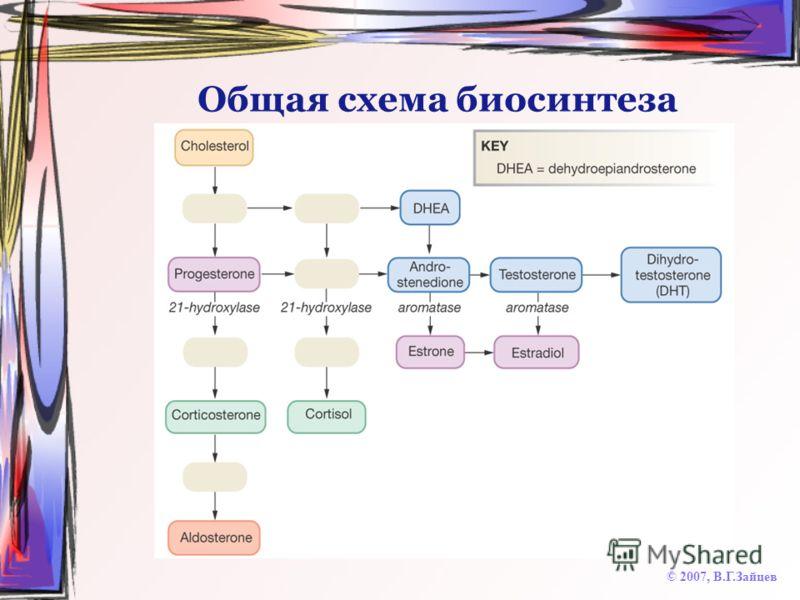 Общая схема биосинтеза © 2007, В.Г.Зайцев