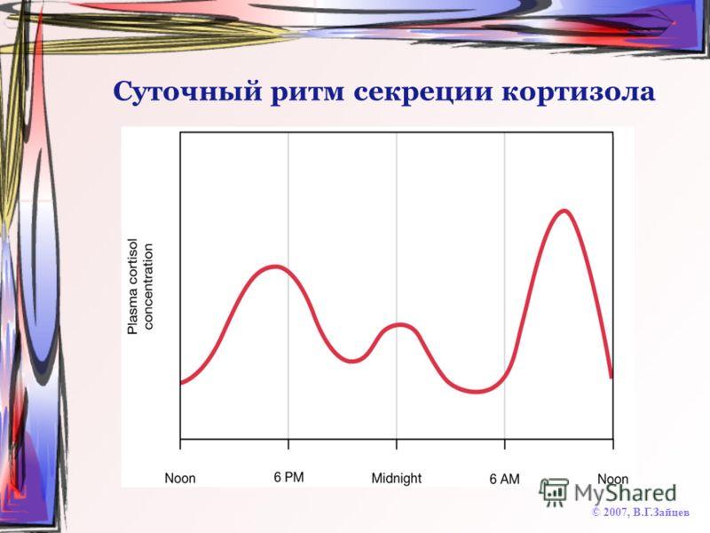 Суточный ритм секреции кортизола © 2007, В.Г.Зайцев