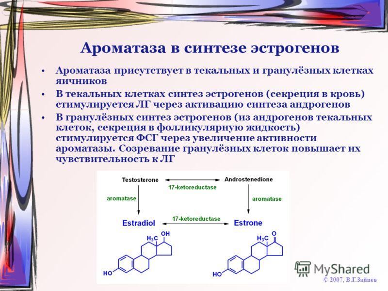 Ароматаза в синтезе эстрогенов Ароматаза присутствует в текальных и гранулёзных клетках яичников В текальных клетках синтез эстрогенов (секреция в кровь) стимулируется ЛГ через активацию синтеза андрогенов В гранулёзных синтез эстрогенов (из андроген